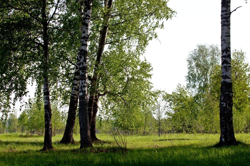 Коттеджный посёлок  «Рузские дачи» по адресу Московская обл, Волоколамский р-н, Бражниково д в 92.9км от МКАД предложения по цене от 984 500 руб.